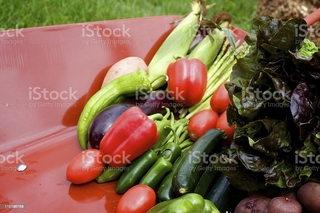 summer vegetable gardening royalty-free stock photo