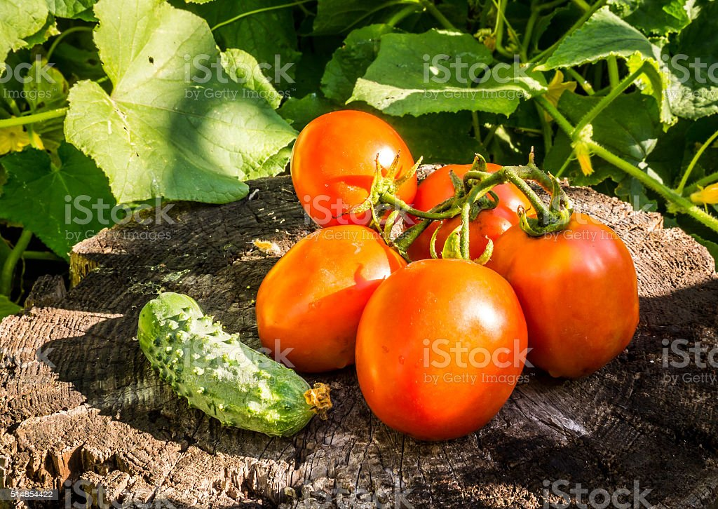 Summer vegetables stock photo