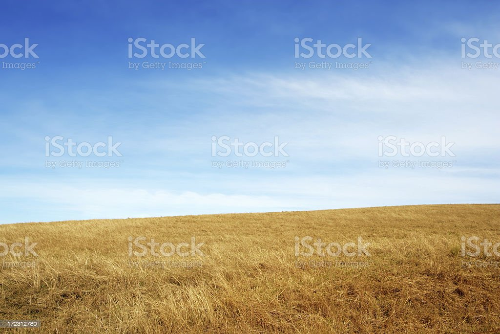 Summer view of a field and sky stock photo