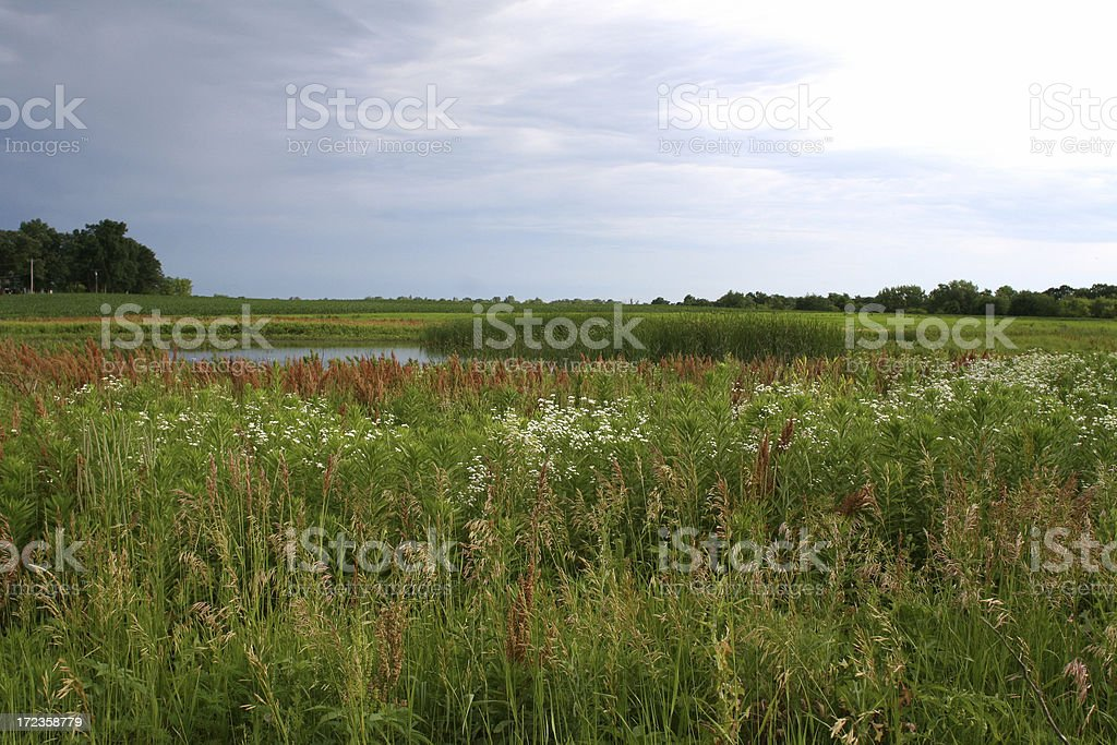 Summer Wetland Scene in Iowa royalty-free stock photo