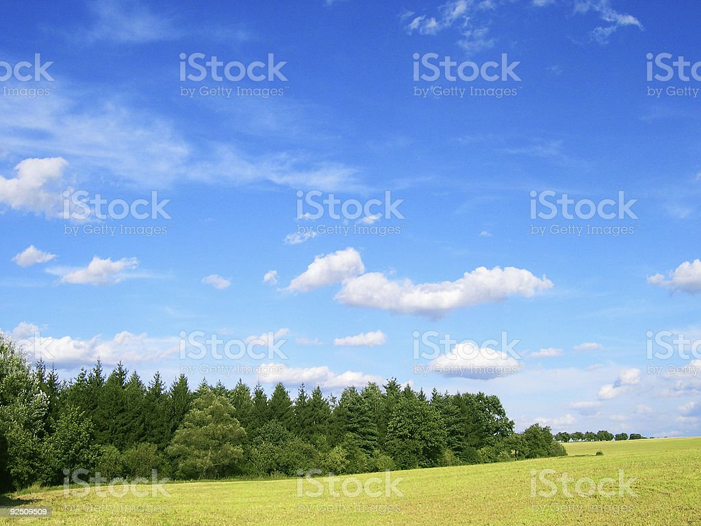 Summer wheat field and forest. royalty-free stock photo