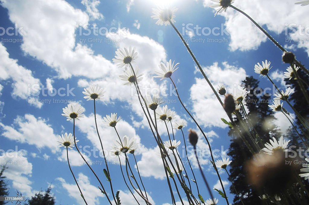 Summer wildflower meadow royalty-free stock photo