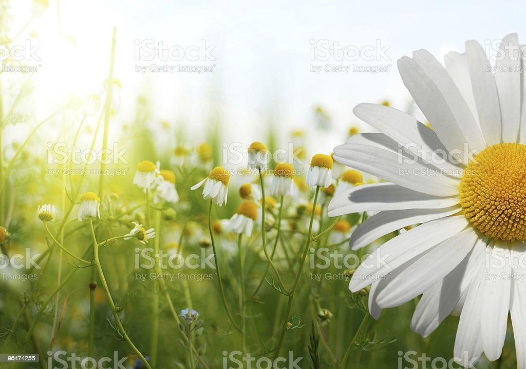 Summer wildflowers during the day stock photo