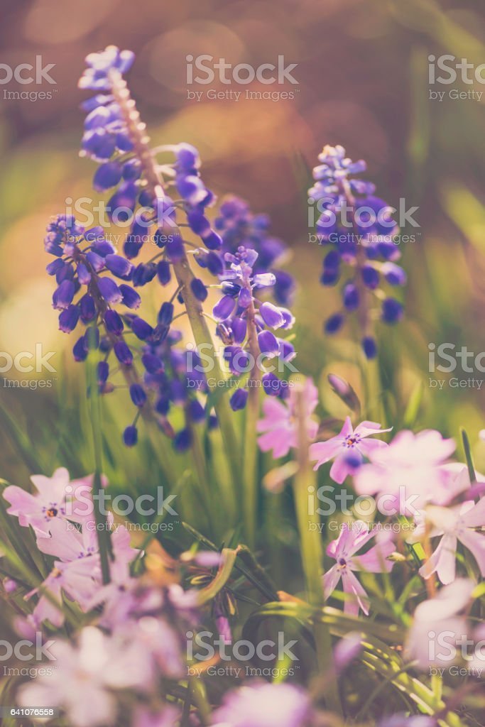 Summer wildflowers in full bloom stock photo