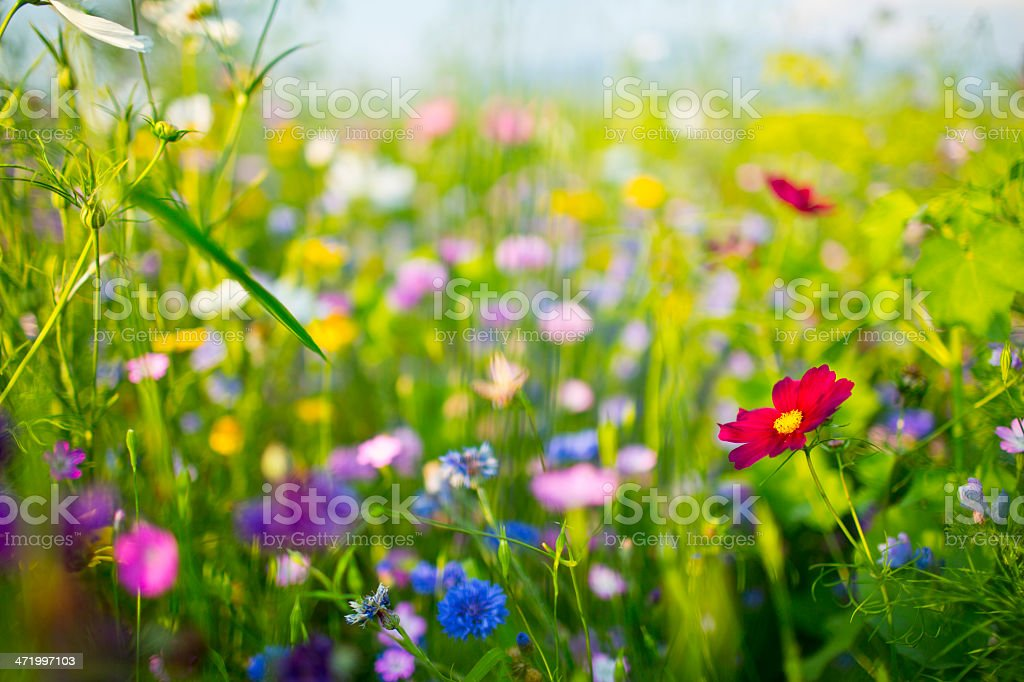 Summer Wildflowers stock photo