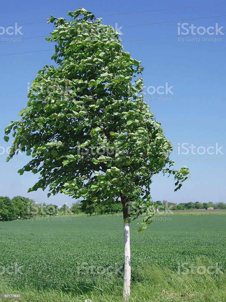 summer wind Lizenzfreies stock-foto