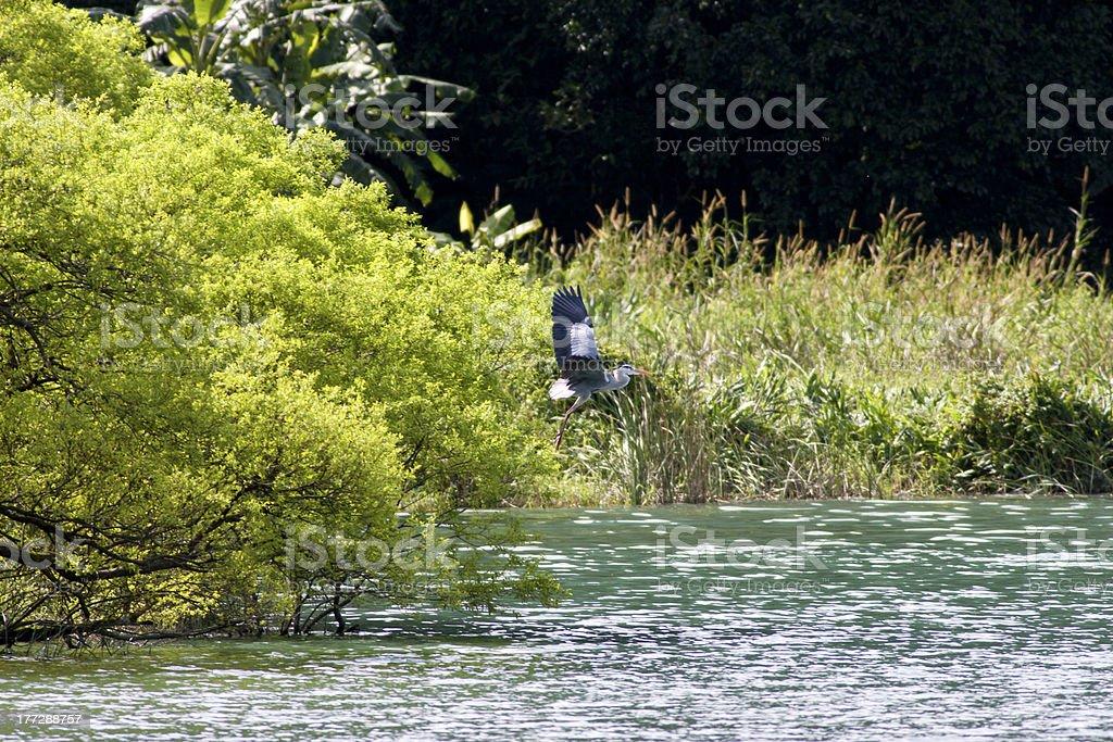 summer wood lake stock photo