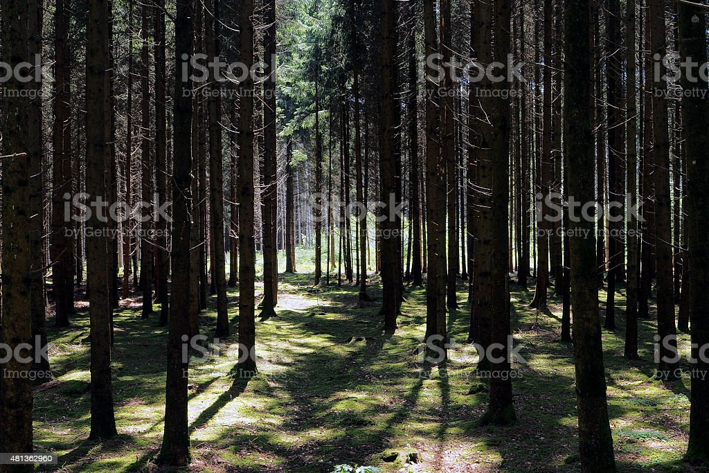 Summer wood stock photo