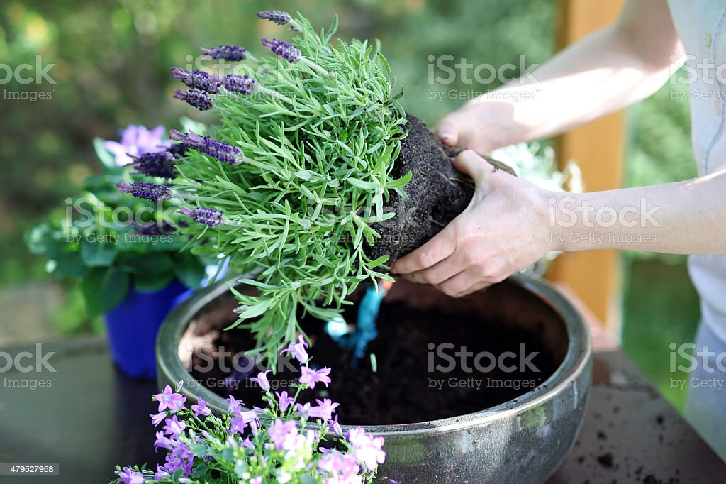 Summer work in the garden stock photo