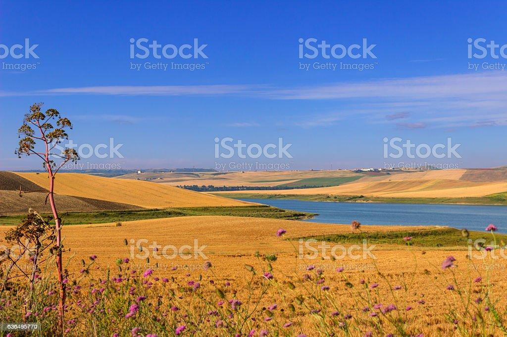 RURAL LANDSCAPE SUMMER.Between Apulia and Basilicata: Lake Basentello.Poggiorsini (ITALY) stock photo