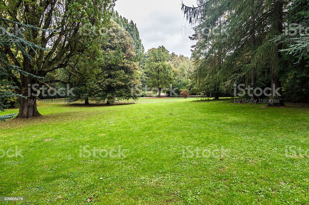 Summer-day bed-meadow in a park stock photo