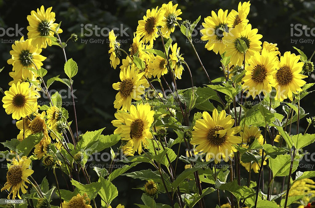 Summerflowers stock photo
