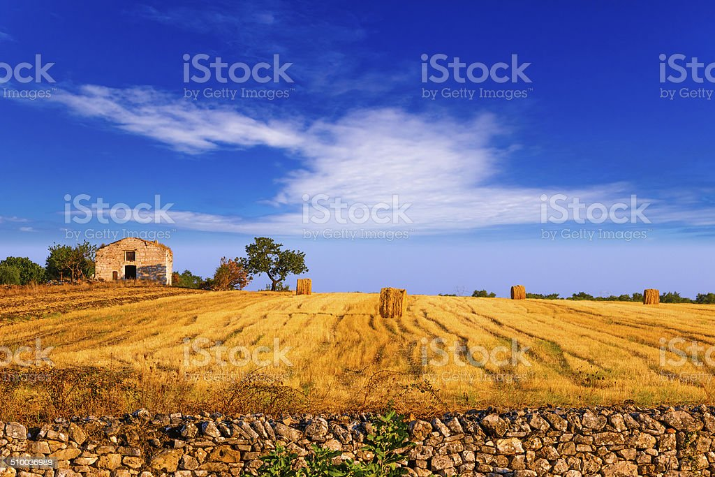 RURAL LANDSCAPE SUMMER.Harvested field with bales of hay.- (Apulia) ITALY- stock photo