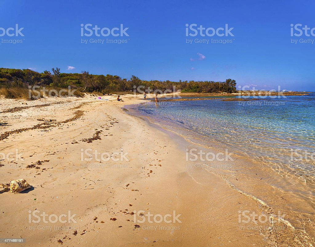 SUMMER.Mediterranean maquis: a nature reserve of Torre Guaceto.BRINDISI (Apulia)-ITALY- royalty-free stock photo
