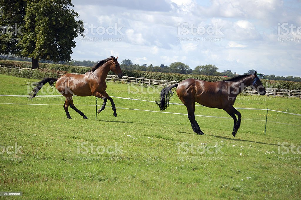 Summers day stock photo