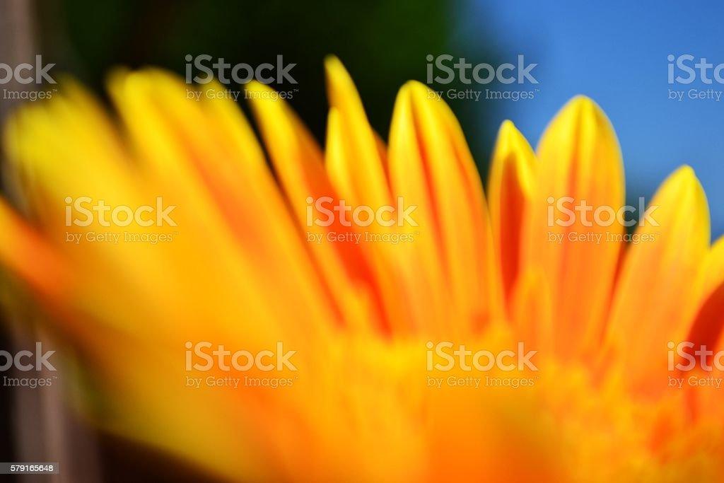 summer's flowers stock photo