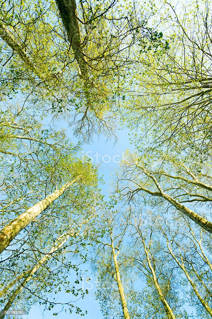 Summer's forest in a clear day - low angle view stock photo