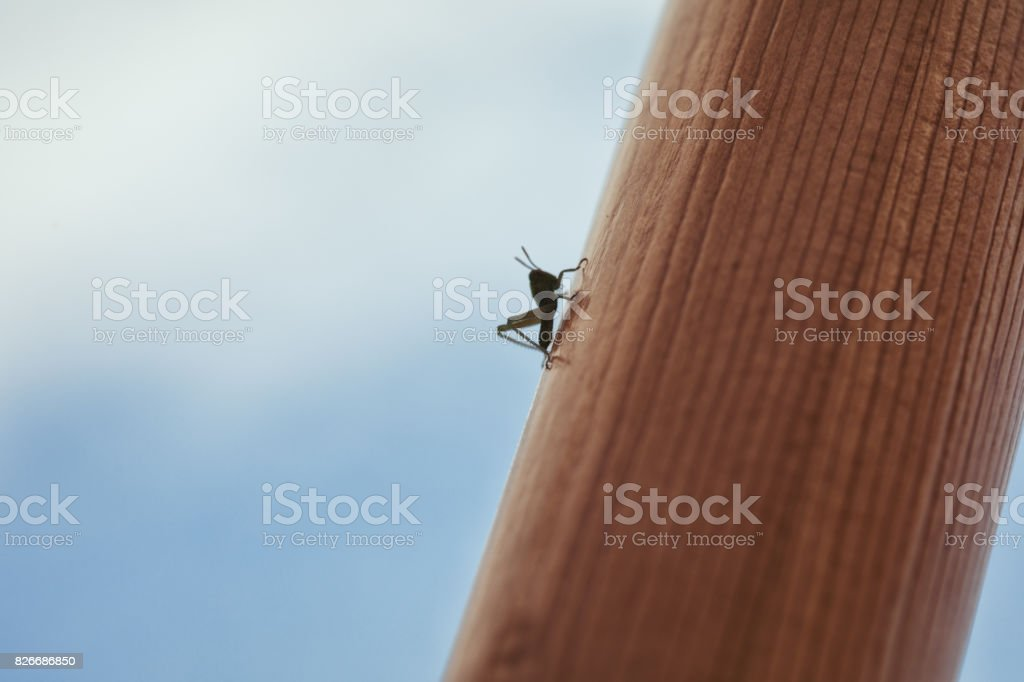 Summertime backgrounds concept - Lazy grasshopper enjoying the summer, blue sky in the background stock photo
