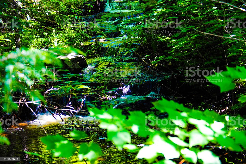 Summertime Creek royalty-free stock photo