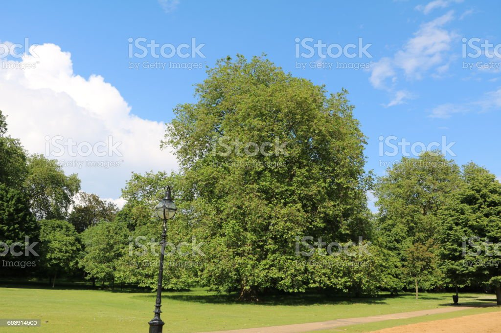 Summertime, Old trees in Hyde Park in London, United Kingdom stock photo