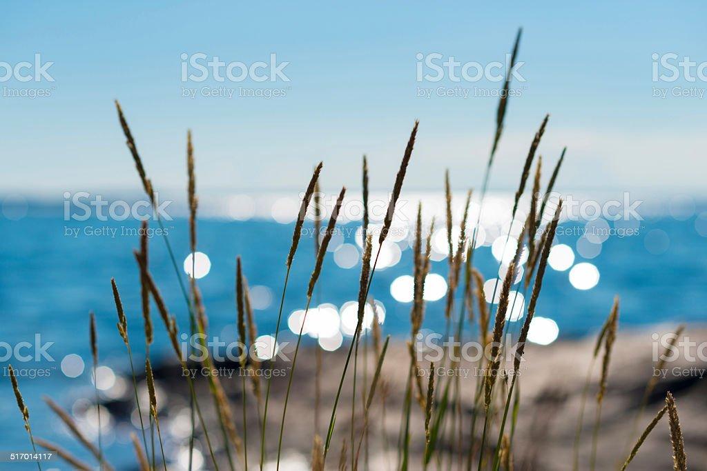 Summertime reeds against glittering sea stock photo