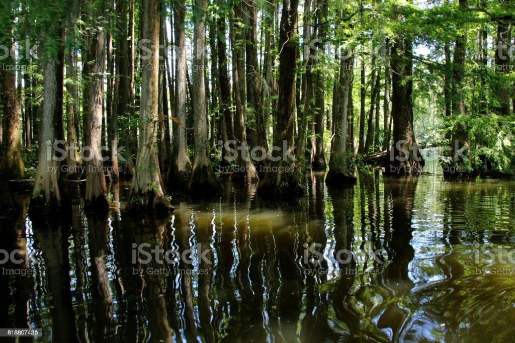 Sumpf in North Carolina stock photo