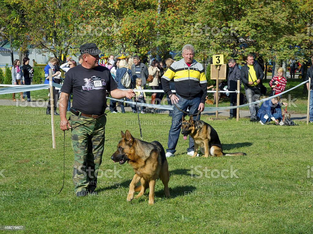 Sumy regional dog show royalty-free stock photo