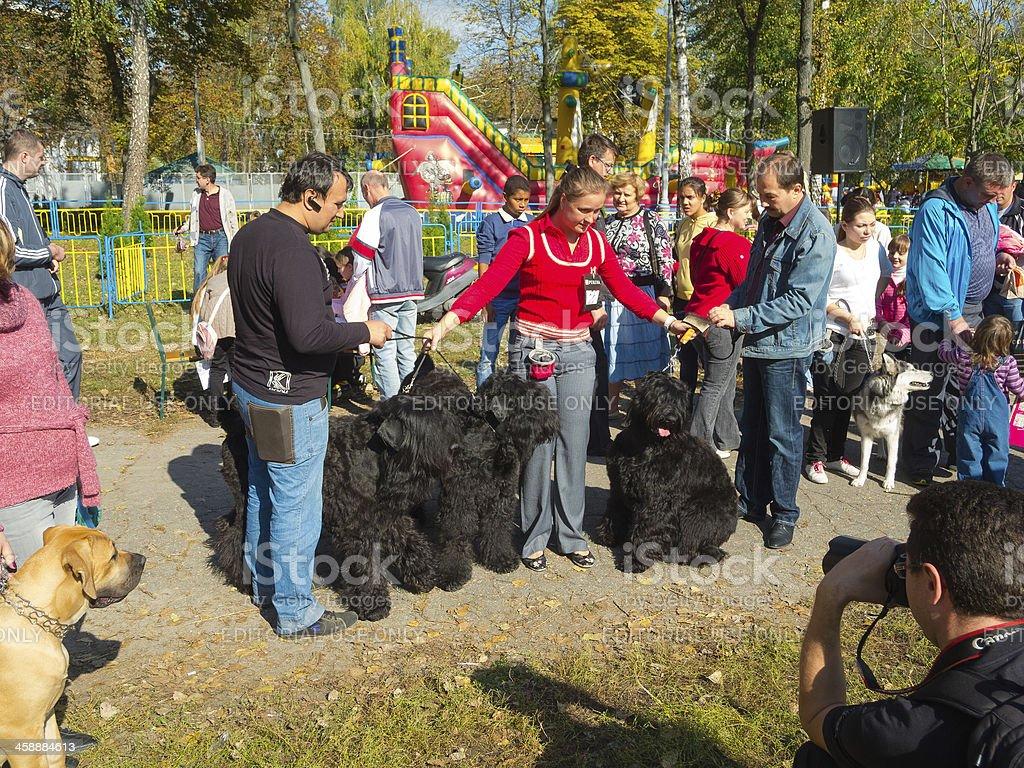 Sumy regional dog show royalty-free stock photo