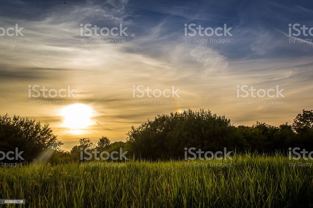 Sun about to set behind tall reeds and bushes stock photo