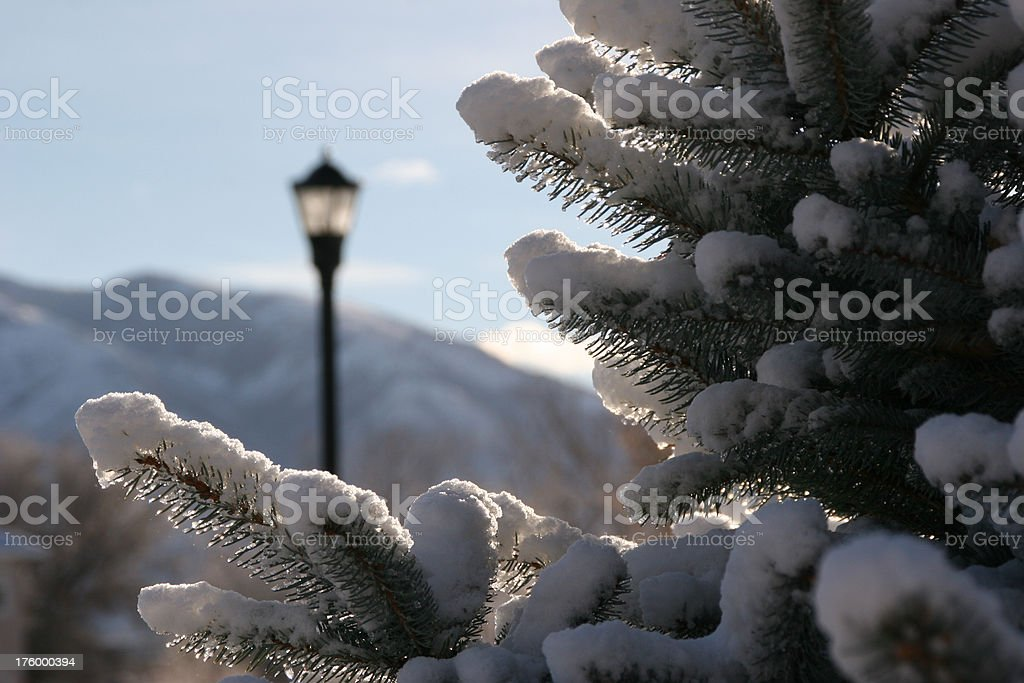 Sun After the Snow royalty-free stock photo