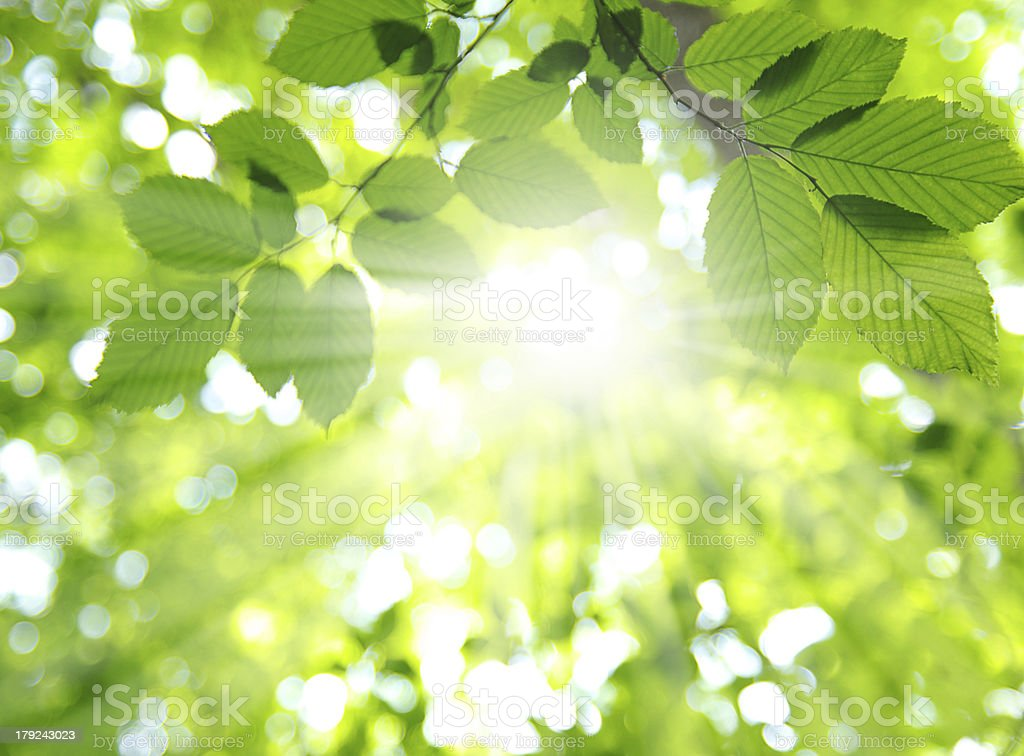 Sun and leaves stock photo