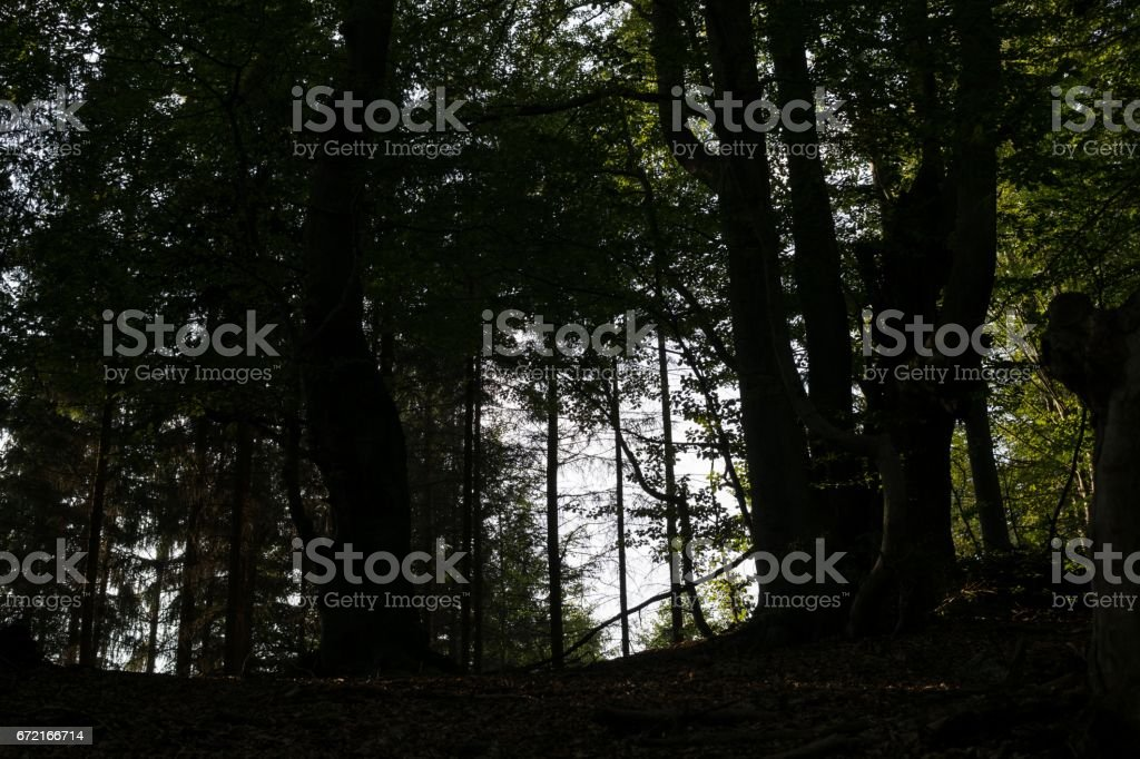 Sun and shadows in forest. Slovakia stock photo