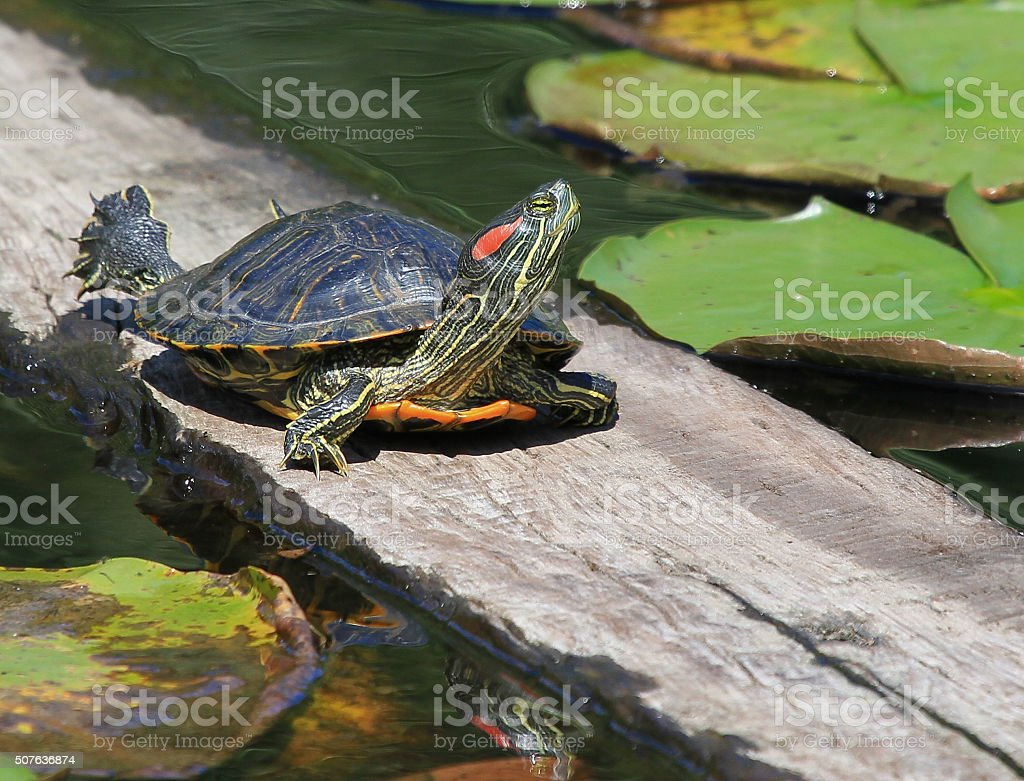 Sun bathing stock photo