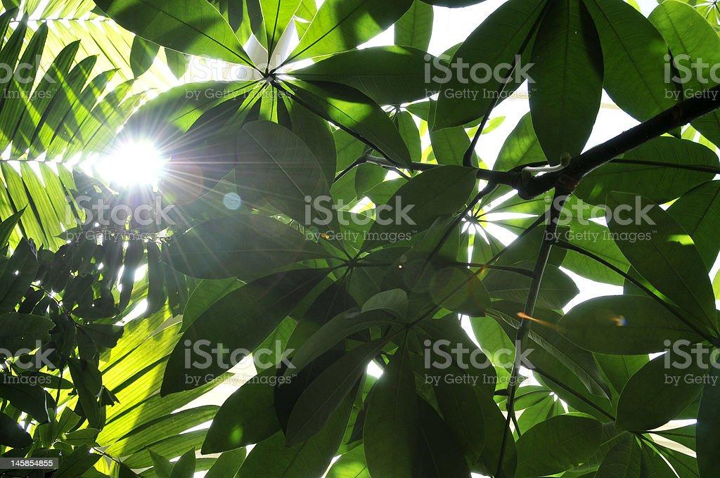 Sun beam between leaves stock photo
