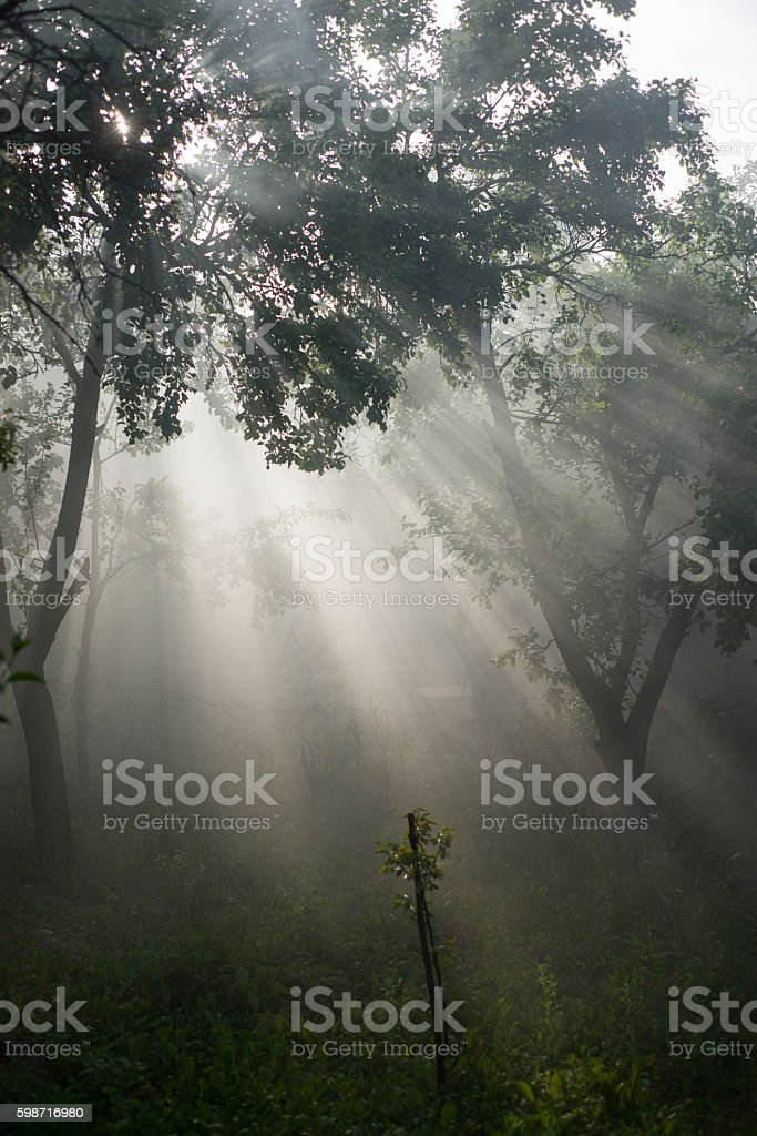Sun beam in a green forest stock photo