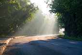 Sun beams fall down on a paved road through crown.