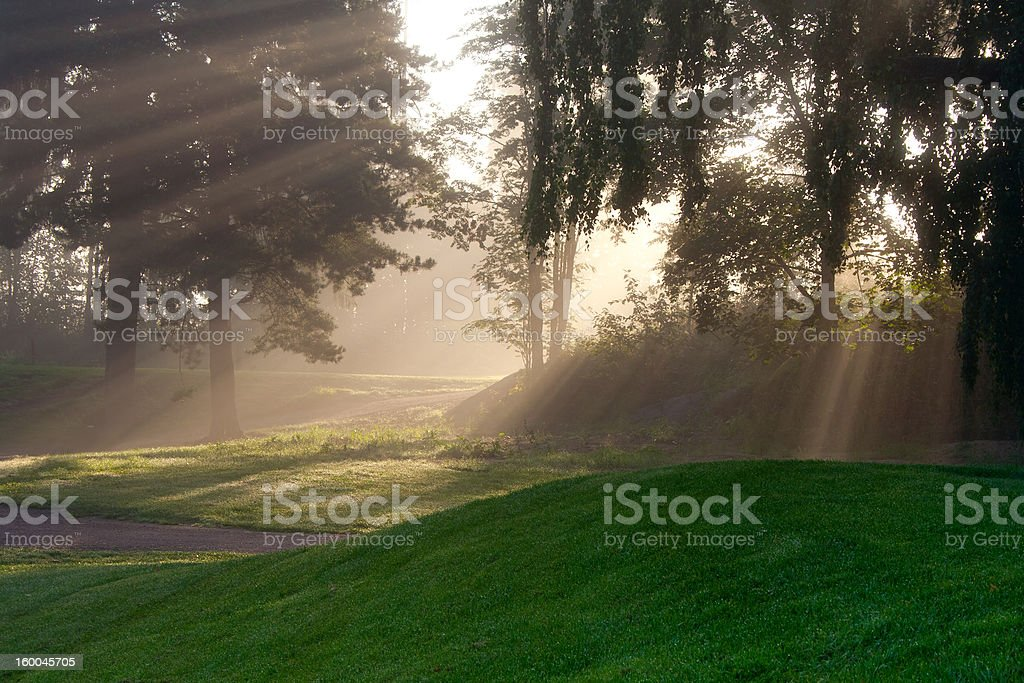 Sun beams in foggy morning royalty-free stock photo