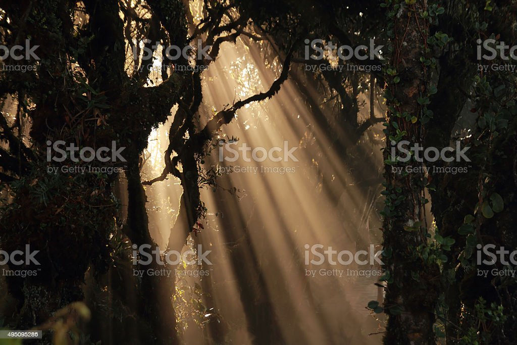sun beams in forest stock photo