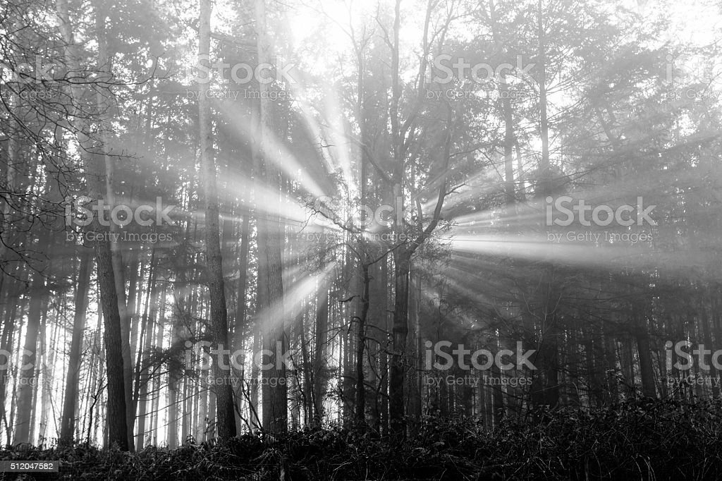 Sun beams thorough trees and greens stock photo