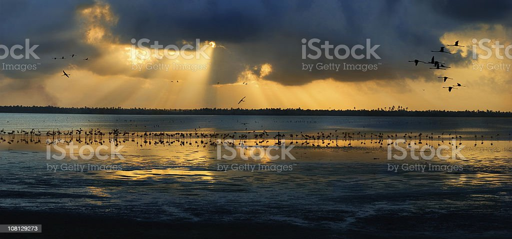 Sun Coming Through Clouds with Flamingos Standing in Lagoon royalty-free stock photo