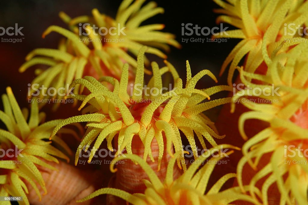 sun coral royalty-free stock photo