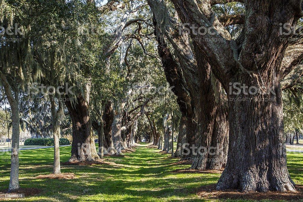 Sun Dappled Lawn Around Trees royalty-free stock photo