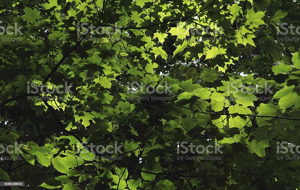 Sun Dappled Tranquility stock photo