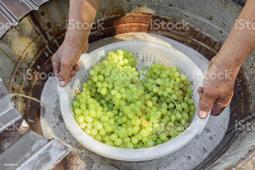 Sun drying grape with dipping method stock photo