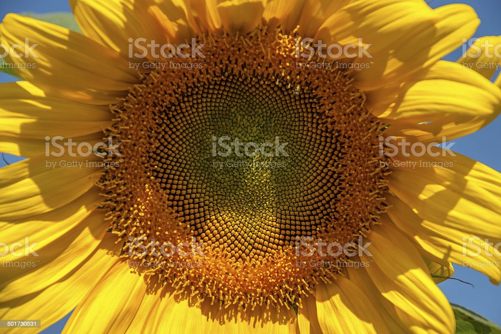 Sun flow 2 stock photo