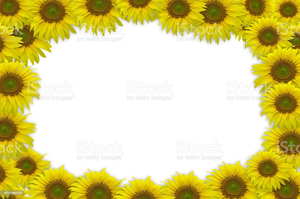 sun flower border for presentation stock photo
