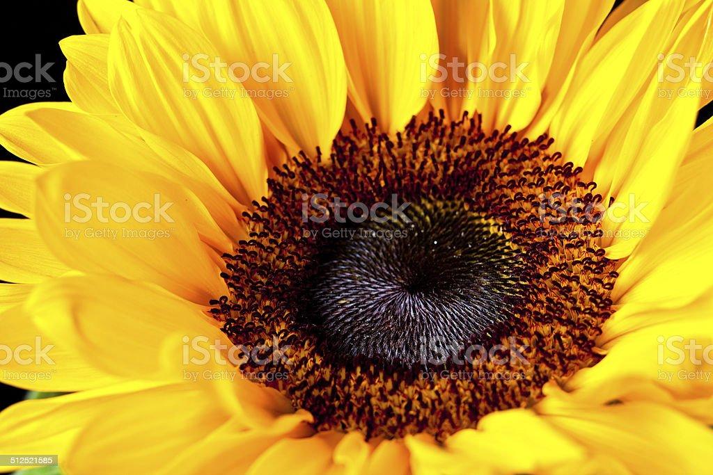 Солнце, цветок Стоковые фото Стоковая фотография