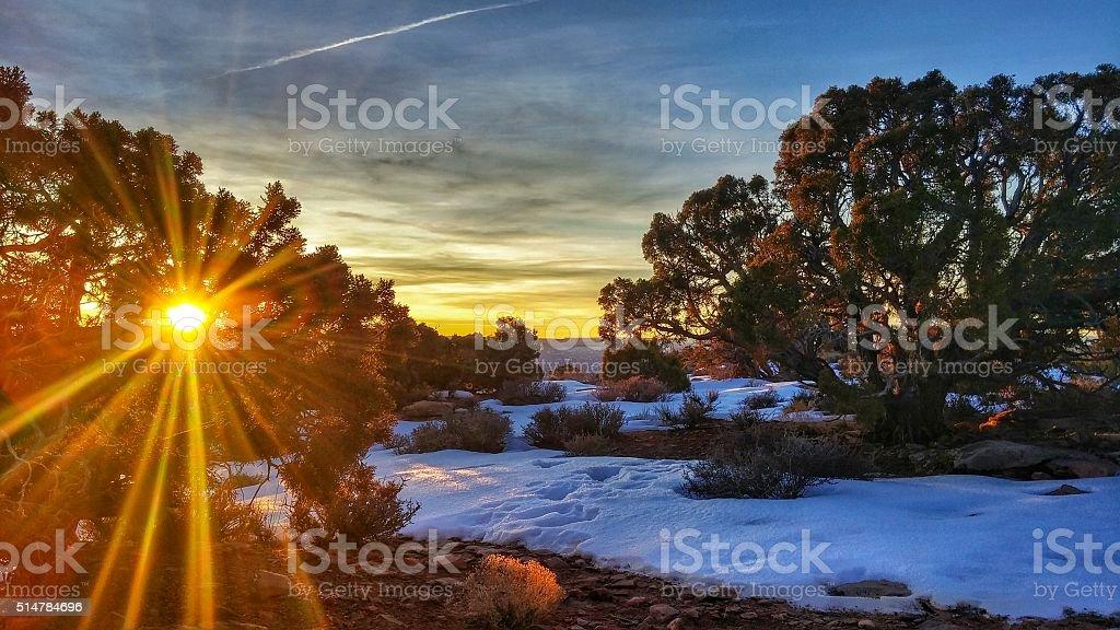 Sun Glare through Juniper Tree Sunrise, Canyonlands National Park, Utah stock photo