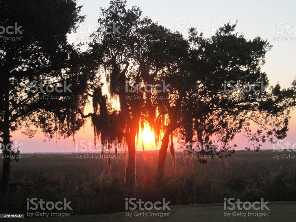 Sun Glowing Through Spanish Moss Tree stock photo