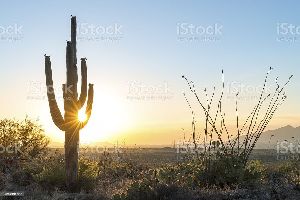 Sun going down on cactus stock photo
